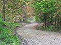 Track, Collingbourne Copse - geograph.org.uk - 420077.jpg