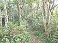 Trail between Mount Awa and Mount Sankaku 2018.JPG