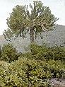 Tree and vegetation (3947976745).jpg