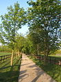 Tree lined farm track - geograph.org.uk - 1267150.jpg