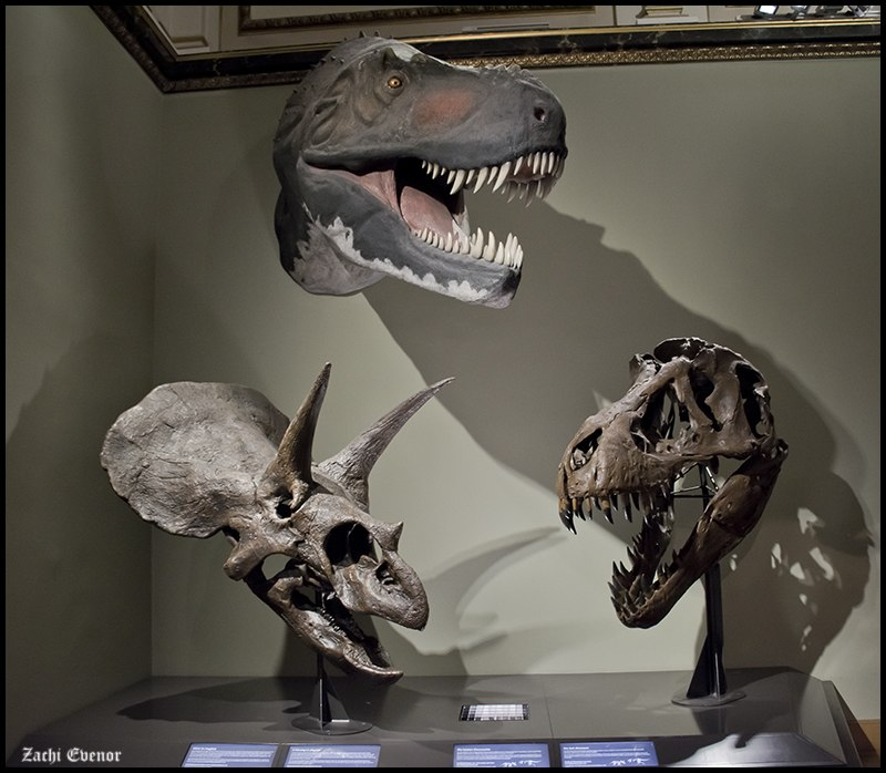 Triceratops and T-Rex (15600555045)