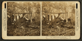Trophies of the hunt in the Maine woods. (A deer hunters' camp showing men cooking and relaxing.), from Robert N. Dennis collection of stereoscopic views 2.png