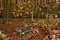 Un banc dans le tapis de feuilles (22841397312).jpg