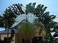 Unbek palme 002.jpg