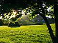 Under A Tree - panoramio.jpg
