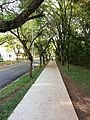 University of Sao Paulo campus 2016 001.jpg