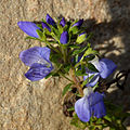 Unknown plant 2015-11-28 13-43-24.JPG