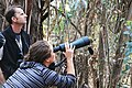 Using a spotting scope to count monarchs at a roost site (23579787721).jpg