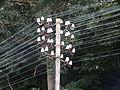 Utility pole (Lich).jpg