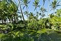 Vegetation in Bahia.jpg