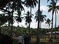Viper island andmans (4).jpg