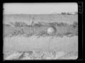 Vit dragonfana - Livrustkammaren - 54122.tif