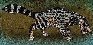<i>Viverra leakeyi</i> species of mammal (fossil)