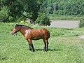 Vyazovenka - Horse - 02.jpg