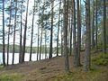 Vyborgsky District, Leningrad Oblast, Russia - panoramio (39).jpg