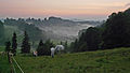 Wald, OAL - Wertachschlucht, Nebel, Pferde 01.JPG