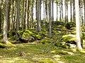 Wald bei Böbrach.jpg