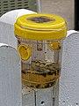 Wasp trap at Bishop's Stortford Cricket Club, Hertfordshire.jpg