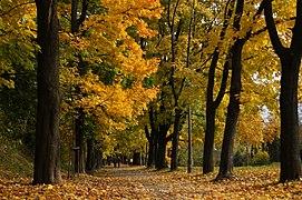 Waszyngton Av, autumn, Krakow, Poland.jpg