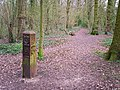 Waymarked path in Clayfield Copse - geograph.org.uk - 1233172.jpg