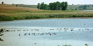 Johnson Lake National Wildlife Refuge - Canada geese on a wetland lake