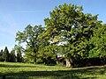 Wiesen bei Raut (Kochelsee Westufer, Ortsteil von Schlehdorf) Oberbayern.jpg