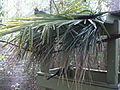 Wild Adventures Bird House 102013 8.JPG