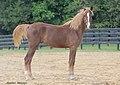 wiki masse corporelle cheval