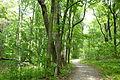 Woods, Dawes Arboretum - DSC02966.JPG