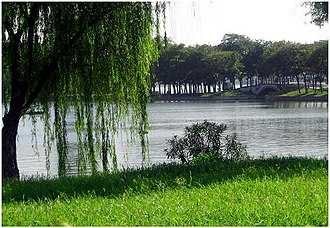 Xuanwu Lake - Image: Xuanwulake willows