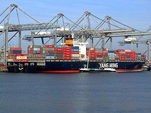 YM Pine, at the Amazone harbour, Port of Rotterdam, Holland 18-Jan-2005.jpg