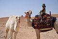 Young Camel Driver - Flickr - edbrambley.jpg