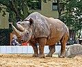 Zoo-nashorn-ffm003.jpg