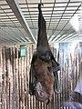 Zoo des 3 vallées - Roussette - 2015-01-02 - i3399.jpg