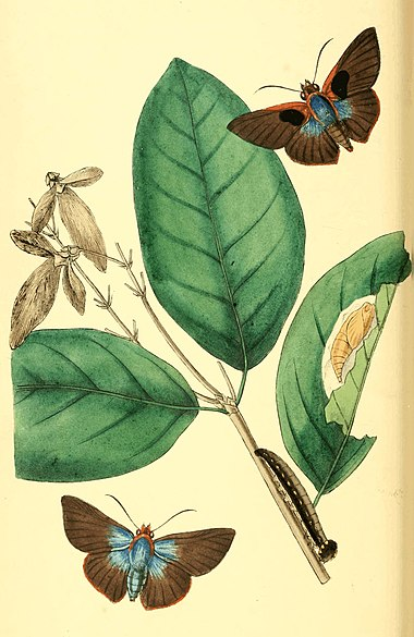 Zoological Illustrations Volume I Plate 16.jpg