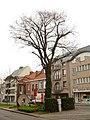 Zottegem Heldenlaan Vredesboom (3) - 191115 - onroerenderfgoed.jpg