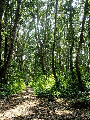 Jozani Chwaka Bay National Park - Image: (128) Jozani Chwaka National Park