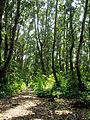 (128) - Jozani Chwaka National Park.jpg