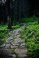 Ścieżka na Babią Górę.jpg