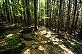 Ślęża, Niebieski szlak - fotopolska.eu (227426).jpg
