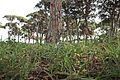 Δάσος Στροφυλιάς 14.jpg