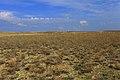 Акбулакская степь - panoramio - Сергей Метик.jpg