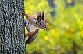 Білка на дереві в дендропарку Олександрія.jpg
