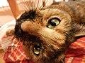 Взгляд кошки загадочен.jpg