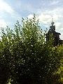 Вид на Преображенскую церковь, Хохловка.jpg