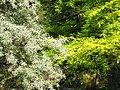 Гази Баба - Мешавина од растителни бои (19).JPG