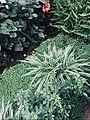 Забайкальский ботанический сад.jpg
