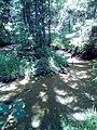 Заболоченный участок ручья в Аверкиевском лесничестве.jpg