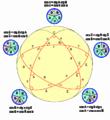Звездчатый пятиугольник 2.png