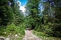 Ліс. Околиці с.Гута.jpg
